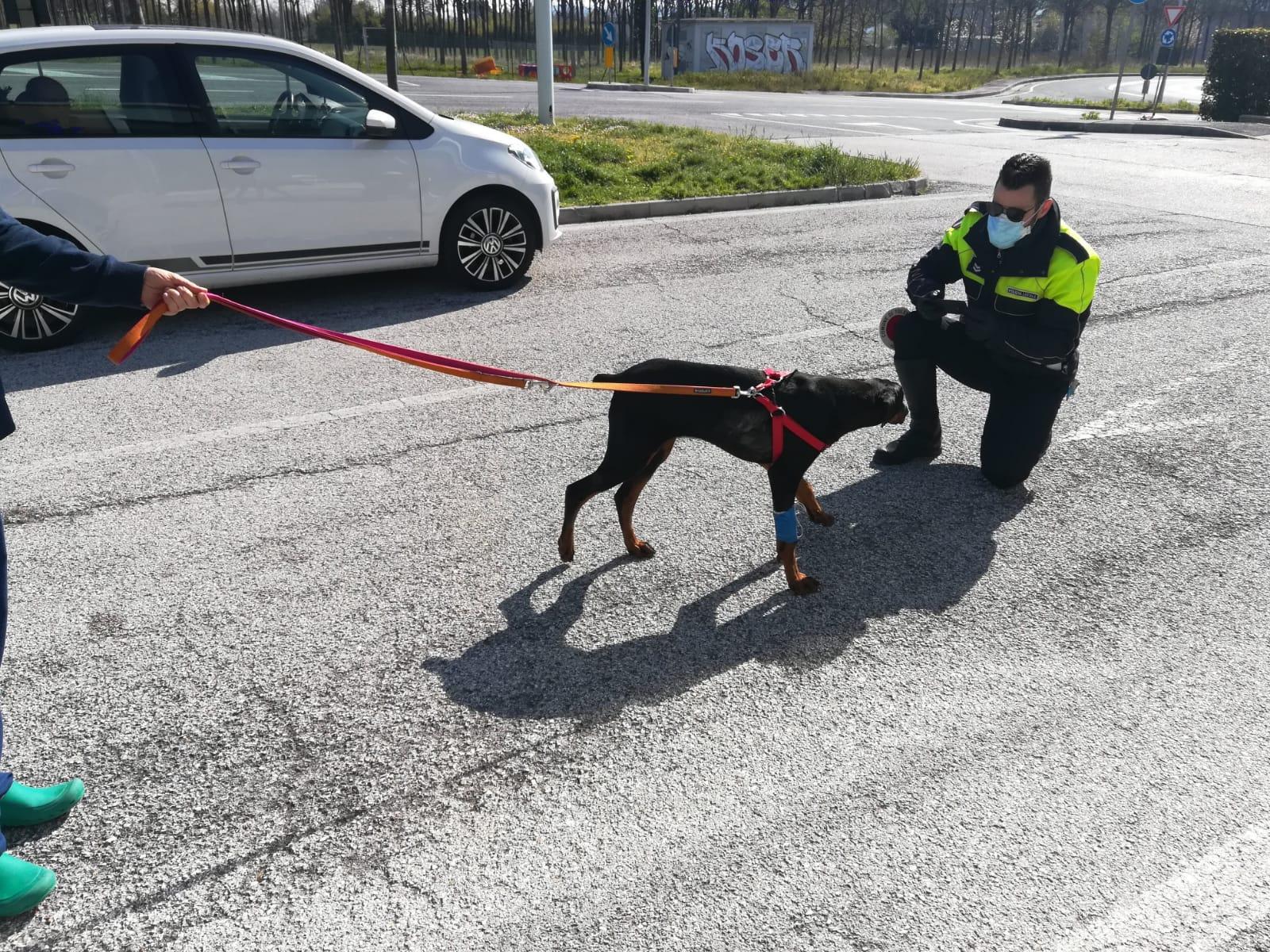 polizia locale sequestro cane